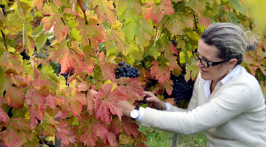 (Srpski) Marina Cvetić – prefinjeno vino