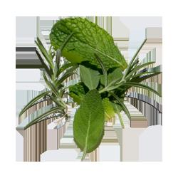 Herbalne arome